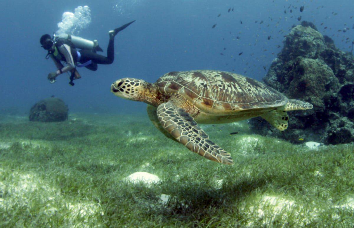 Philippines: Where to scuba dive