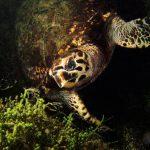 Turtle underwater in Palawan